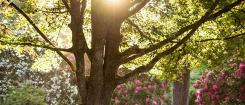 sun shining through tress and flowers